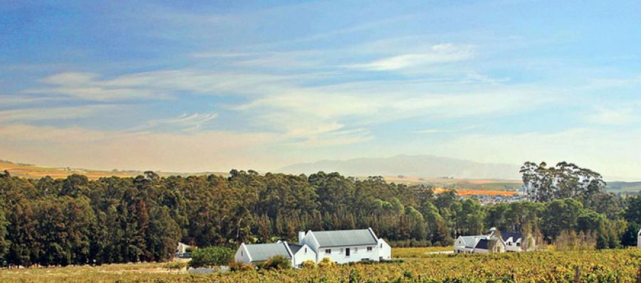 Photo for: Pinotage Culture Embodied at Diemersfontein Wine and Country Estate